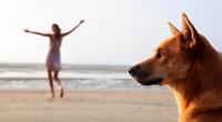 ольга арефьева клип у попа была собака
